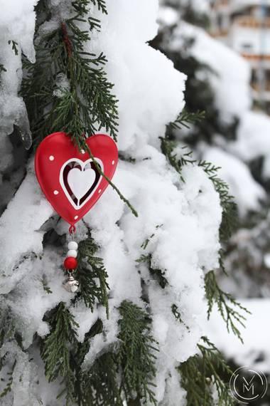 Conbyconv en Hamelin: Flora  (Fuenlabrada), #Invierno20