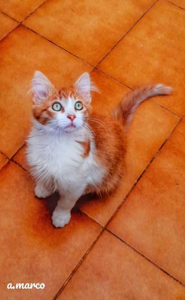 Caferhin en Hamelin: Fauna  (Alicante), Felis catus Linnaeus, 1758, #cosadegatos #kitty   Adorable