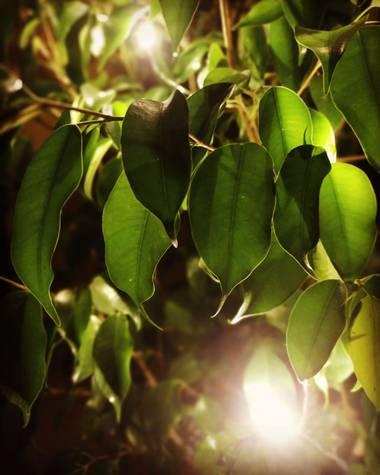 Mjcoriablog en Hamelin: Flora, Técnica Bokeh