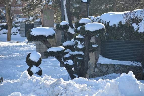 Belenhernandezg en Hamelin: Flora  (Soto del Real), #invierno20