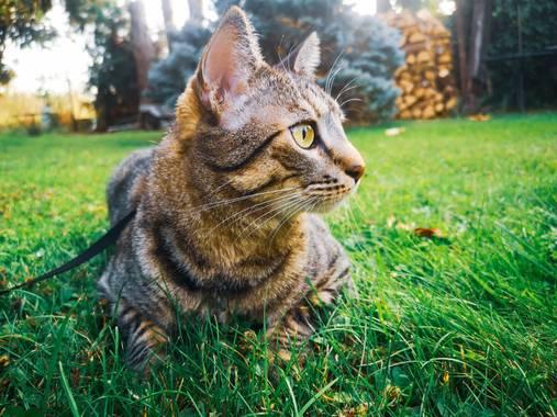 imagiaproducciones en Hamelin: Fauna  (Villafranca del Bierzo), #gatocallejero #gatogris #gatohogareño #gatosdelmundo #gatocomuneuropeo #gatosalvaje #gatod...