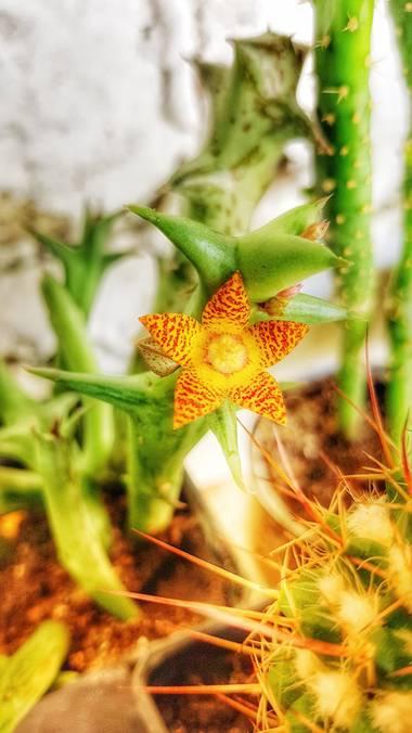 Neilmarquez en Hamelin: Flora  (Las Delicias)
