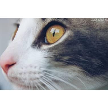 Ortizborras en Hamelin: Fauna, Felis catus Linnaeus, 1758, #gato #macrofoto20
