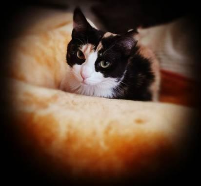 V.sita en Hamelin: Fauna  (Les Coves de Vinromà), Cat#gata.