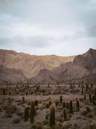 Pikeriel en Hamelin: Paisaje, #desert #cactus