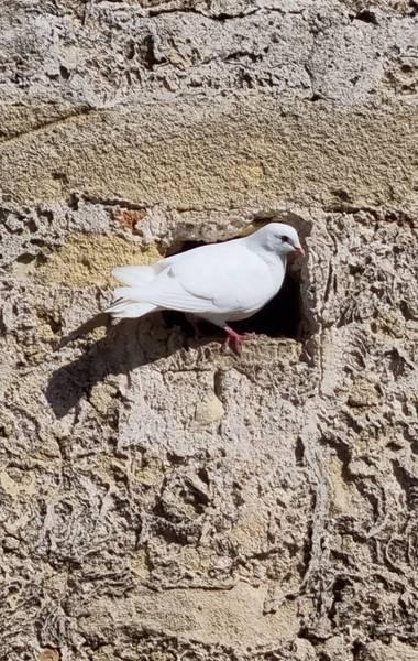 Jonathanmartinbedia0007 en Hamelin: Fauna, #aves21