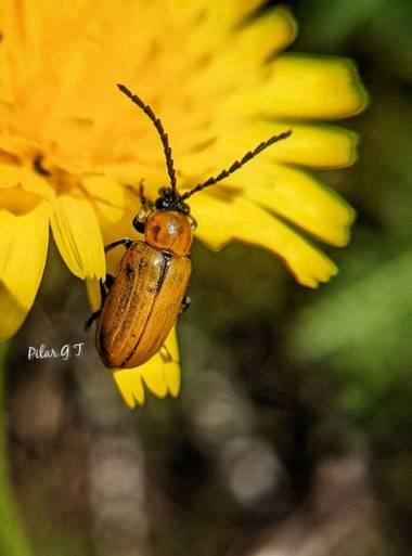 Pilarmayo012 en Hamelin: Fauna  (La Nava de Ricomalillo)