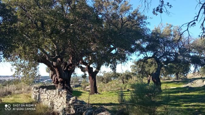 GreenPhoto en Hamelin: Paisaje  (Valencia de Alcántara)