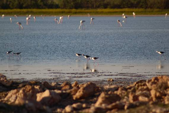 Abril Silvestre en Hamelin: Paisaje  (Osuna), @hamelin #canonphotography #aves #laguna #andalucianice20