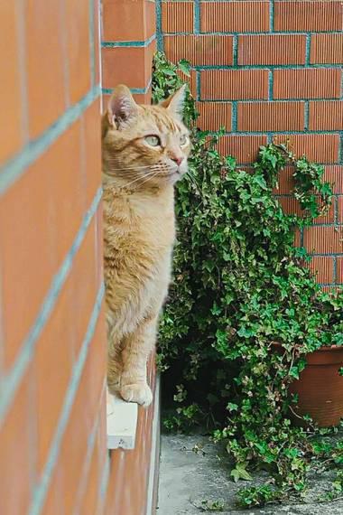Mivilor68 en Hamelin: Fauna  (Ponferrada), #gato