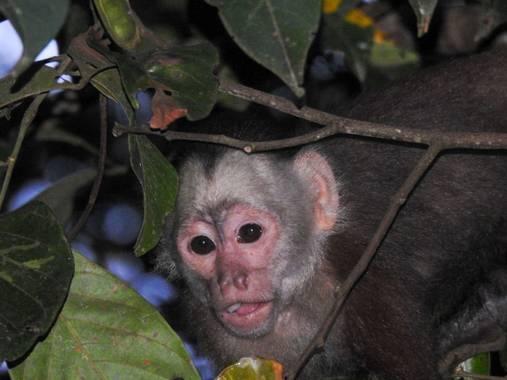 Daniel Pérez  en Hamelin: Fauna, #mokey#mono#fauna