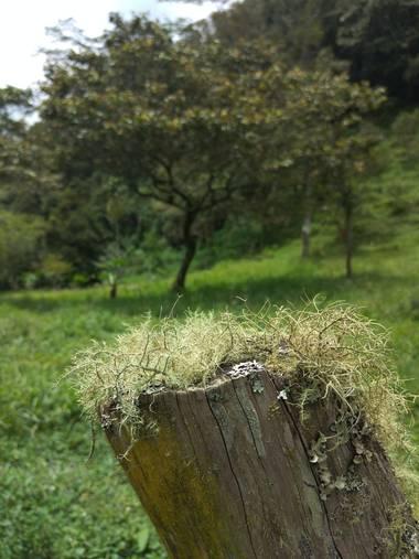 Beth.stalhuth en Hamelin: Observación  (Moniquirá), Musgo en un tronco.  #Moniquira #Boyaca #Colombia