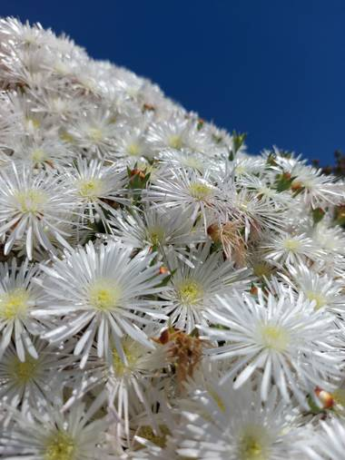 Apasnau75 en Hamelin: Flora  (Pizarra), Rayito de sol 🤍