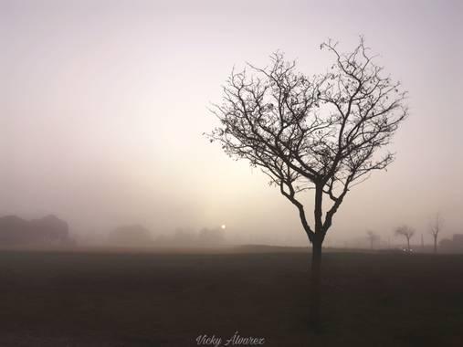 Vicky Álvarez  en Hamelin: Paisaje  (Zaragoza), Amanecer con niebla #zaragoza #paisaje #niebla #sol #arbol