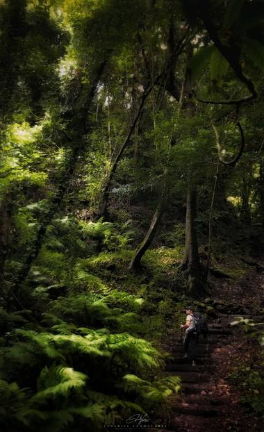 Eduardo García en Hamelin: Flora  (Santa Cruz de Tenerife), Imágen tomada en la Isla de la Palma en el Parque Natural del Cubo de la Galga. Dicha fotografi...