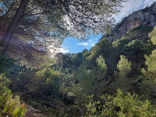 Apasnau75 en Hamelin: Paisaje  (Alhaurín de la Torre), Camino al Pico Paloma