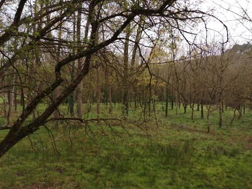 Susandresro en Hamelin: Paisaje  (Lugo), Paseo a Hombreiro. Lugo.