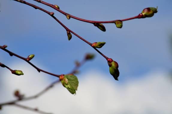 Azulmarino  en Hamelin: Flora  (Viladamat), Composición #naturaleza #brotes #frommypointofview #naturephotography