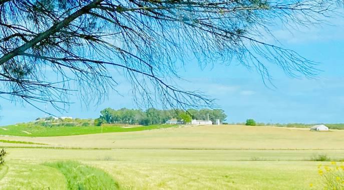 su en Hamelin: Paisaje  (Jerez de la Frontera), El campo en primavera