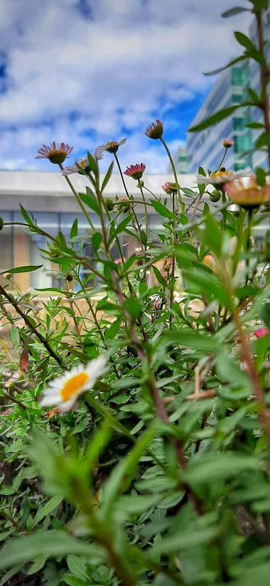 Ivancaicedo11 en Hamelin: Paisaje  (Bogotá, D.C.), #flores en el suelo #paisaje urbano #ciudadela empresarial# Bogotá