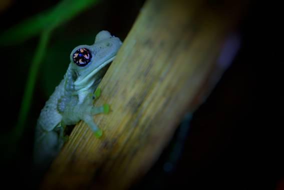 sujkp83 en Hamelin: Fauna, Anura (Amphibia) Rana🐸