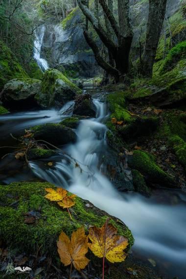 Roberca06 en Hamelin: Paisaje, La zona sombría del cauce de un riachuelo, asoma el musgo de un verde intenso contrastando con el ocre de las hojas otoñale...