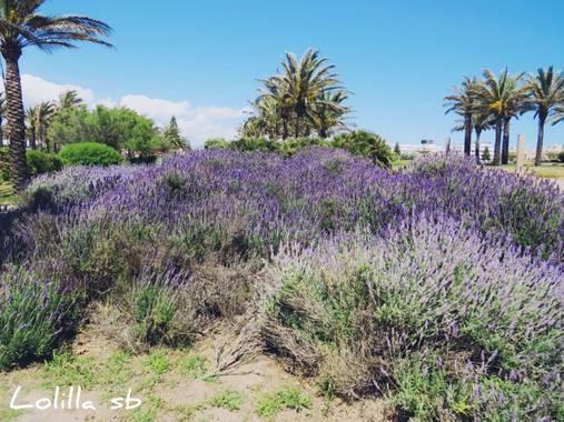 Loso.azu13 en Hamelin: Flora  (Almería), #flora21