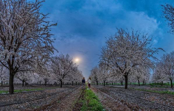 Menlup en Hamelin: Paisaje  (Córdoba), #flora21  A la luz de la luna...