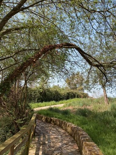 Alquimia Natural en Hamelin: Paisaje  (Marina de Cudeyo), Puentes 💕