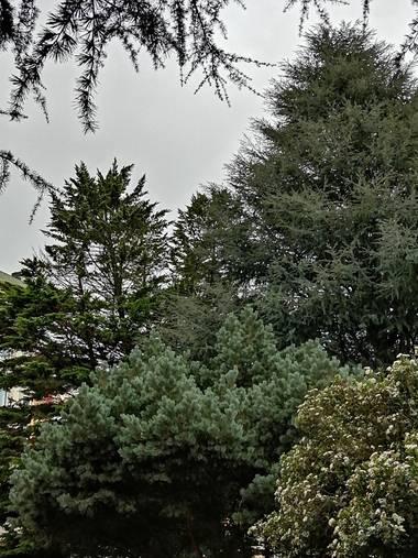 Susandresro en Hamelin: Paisaje  (Lugo), Parque Frigsa. Lugo