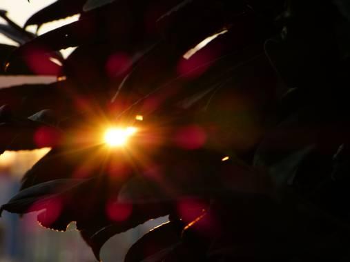 Gemmalajo en Hamelin: Paisaje  (Les Masies de Roda), Capturant l'últim raig de sol!!