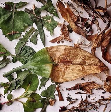 Daugock en Hamelin: Flora  (Bogotá, D.C.), #hoja #hojas #vida  #life #plantas #flora21 #contrast  #nature  #plants  #green #verde  #plants #naturaleza  #na...