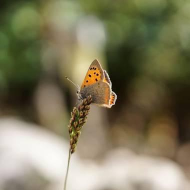 rqsalcedo en Hamelin: Fauna  (Madrid), #mariposas