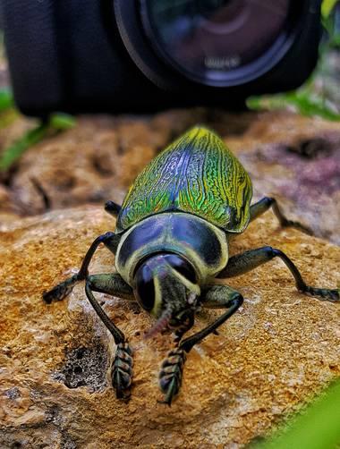 Neilmarquez en Hamelin: Fauna  (Ciudad Jardín)