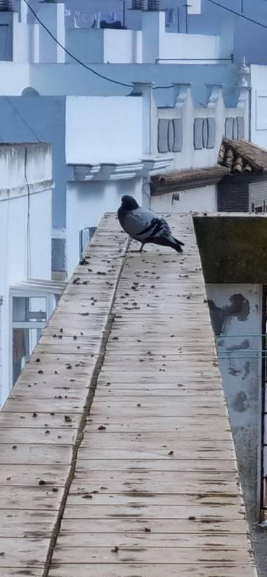 Jonathanmartinbedia0007 en Hamelin: Fauna, @aves21