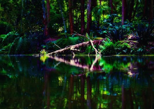 juanandrescardona01 en Hamelin: Paisaje  (Sabaneta), Un paisaje majestuoso de un tronco de árbol, con su reflejo en el agua.  Cuida la naturaleza y tu vida...