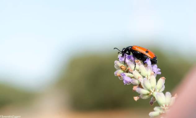 Florentinoeugenio en Hamelin: Fauna  (Brihuega), #bugs