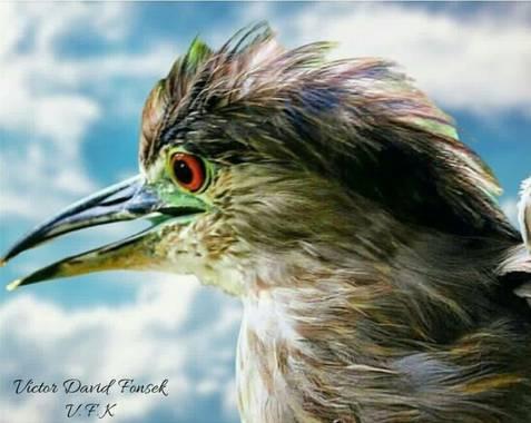 """vicfonckph en Hamelin: Fauna  (Pereira), Naturaleza viva.🦅🐦🍀😃 Naturaleza viva.😌😃 Capturando a esta Belleza de ave. 📸 """"Martineta"""