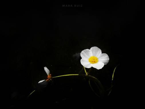 Mararuizasensio en Hamelin: Flora  (Malpartida de Cáceres), #flora21 #macro #flor #flora #flower #huaweiphotography #p30pro #huaweiphotographers