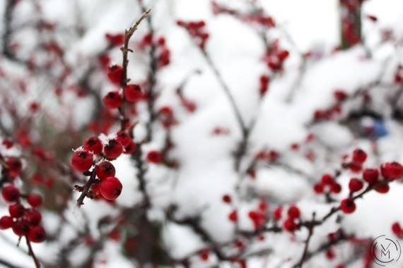 Conbyconv en Hamelin: Flora  (Fuenlabrada), #Invierno20 #invierno2020 #invierno2021