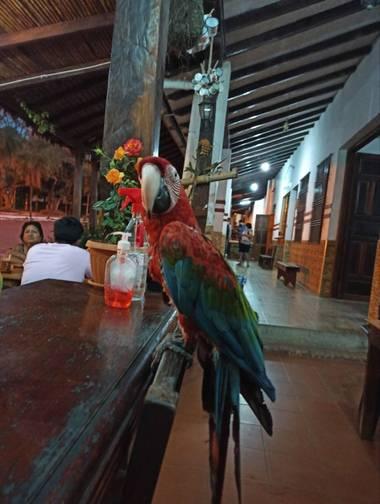 herediacoronel en Hamelin: Fauna  (Buena Vista), Ara macao (Linnaeus, 1758), #aves21 #bolivia