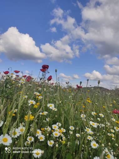 MAYTE LOPEZ en Hamelin: Flora  (Linares), Matices de colores #flora21
