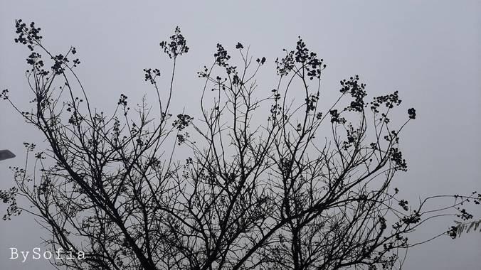 Marisofigonzalez en Hamelin: Flora  (Los Palacios y Villafranca), #niebla