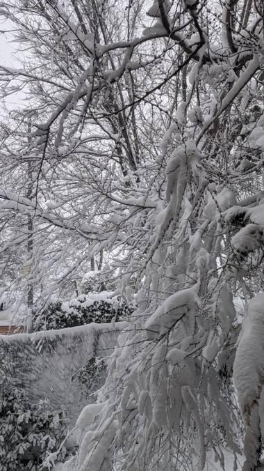 Anaortega2010 en Hamelin: Flora  (Las Rozas de Madrid), #invierno20 #nevadamadrid2021 #bellezanatrural