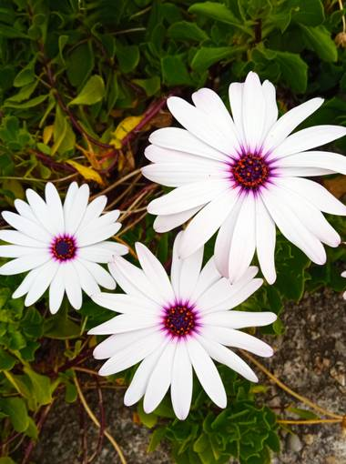 Mariajesussuarez82 en Hamelin: Flora, Flores de mi Jardín!!