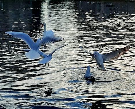 Naomi en Hamelin: Paisaje  (Sabadell), #fauna#lago#noche#invierno20#parquedeCataluña