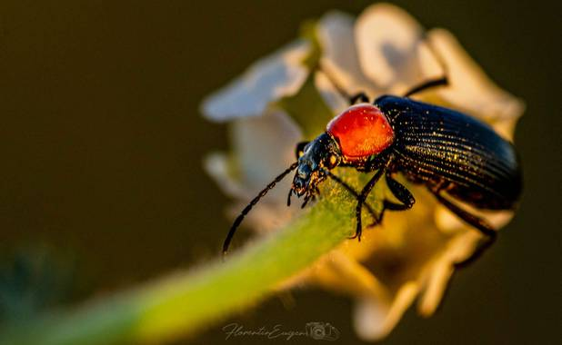 Florentinoeugenio en Hamelin: Fauna  (Rivas-Vaciamadrid), #bugs