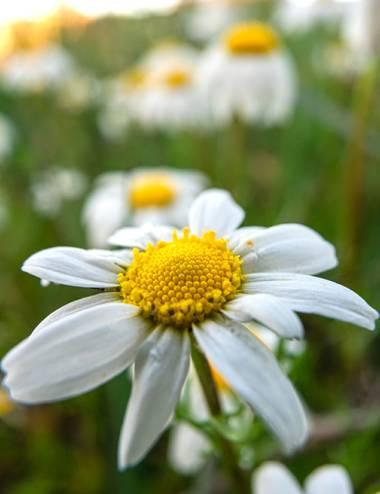 ramonportellano en Hamelin: Flora  (Ronda), Empieza a oler a primavera ☺️☺️☺️
