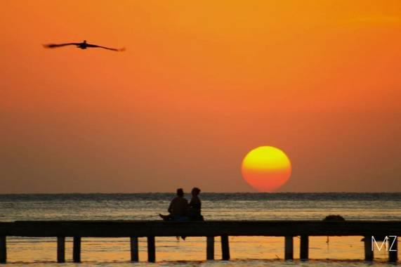 Zuffo.mariana en Hamelin: Fauna  (Cahuita), #paisaje #sunset #atardecer