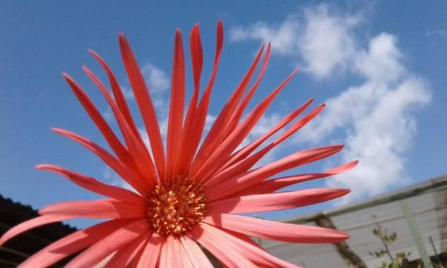 Eik15 en Hamelin: Flora  (Bosa), #colores #flor #hermosa #floracolombiana